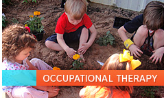 Allied Therapy Occupational Therapy